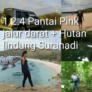 tour lombok 2D1N pantai pink, hutan suranadi
