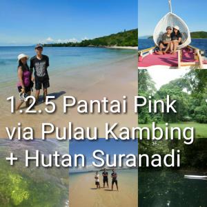 tour lombok 2D1N, Pantai Pink, pulau kambing