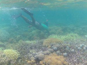 snorkelng di gili petelu pulau tiga