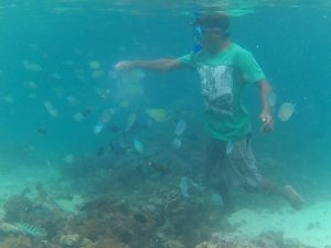 fish feeding di pink beach gili petelu