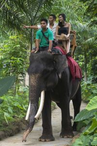 Day tour elephant park lombok