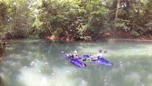 kano hutan suranadi