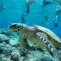 snorkeling gili air bersama penyu