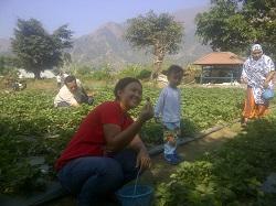556_traveling lombok_wisata petik buah strawbery sembalun